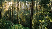 Dandenong Ranges 2 (Small).jpeg