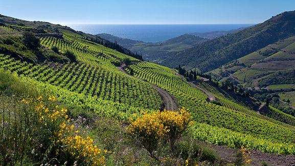 Vignobles de la Côte Vermeille