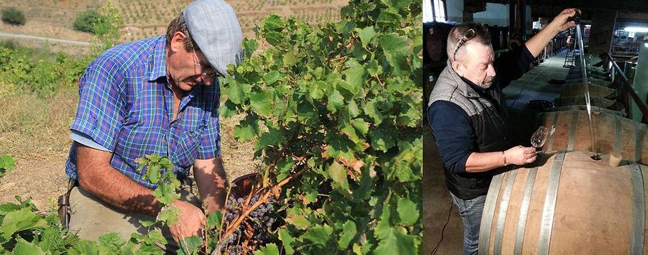 travail de la vigne