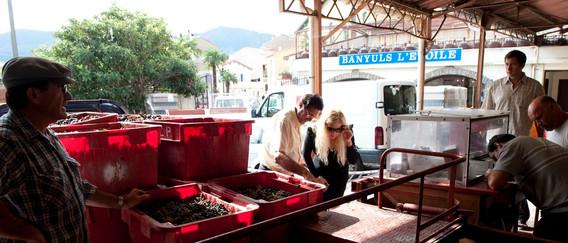 versage du raisin dans le quai d'apport