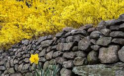New England Spring
