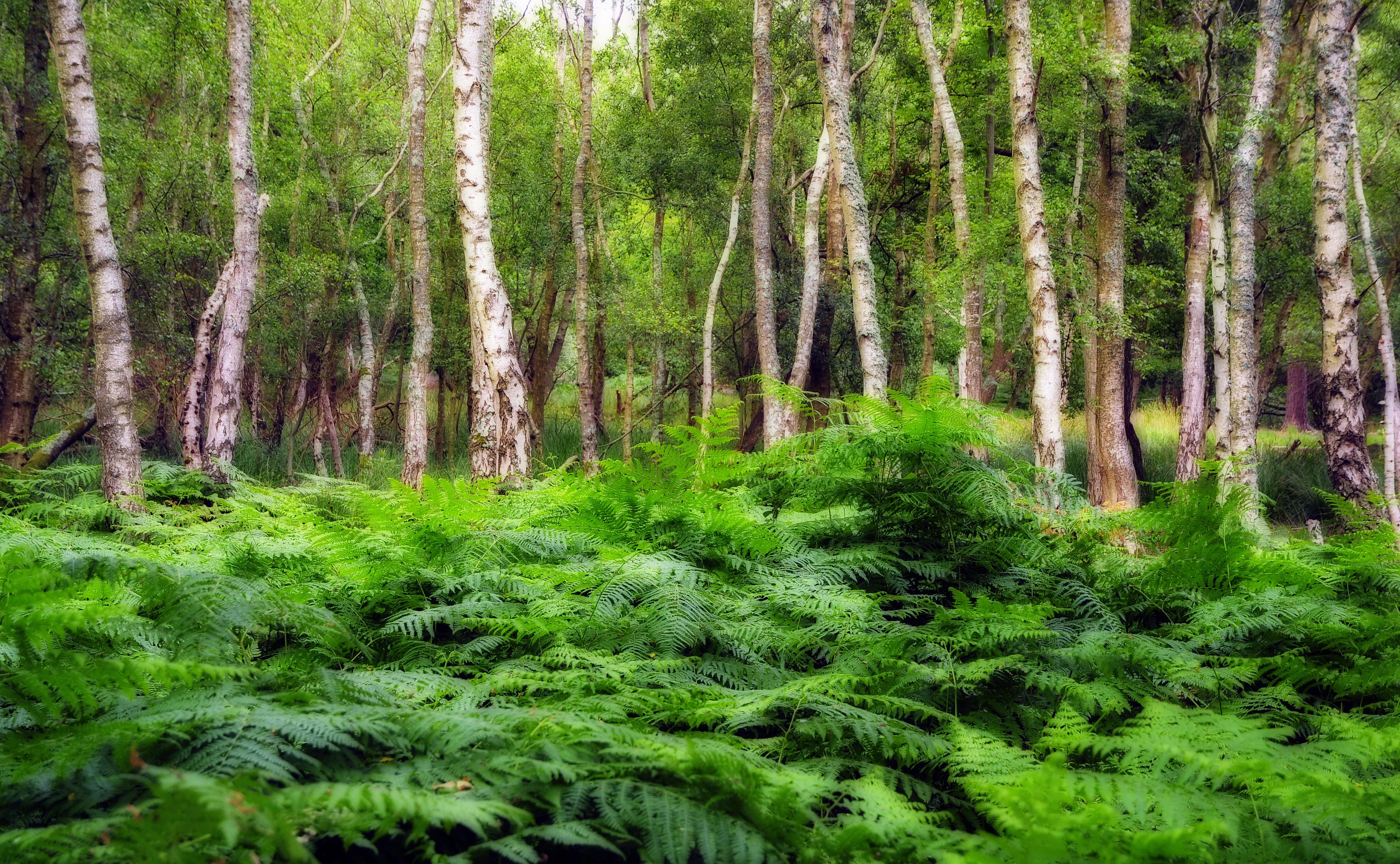 England - Arne Nature Reserve