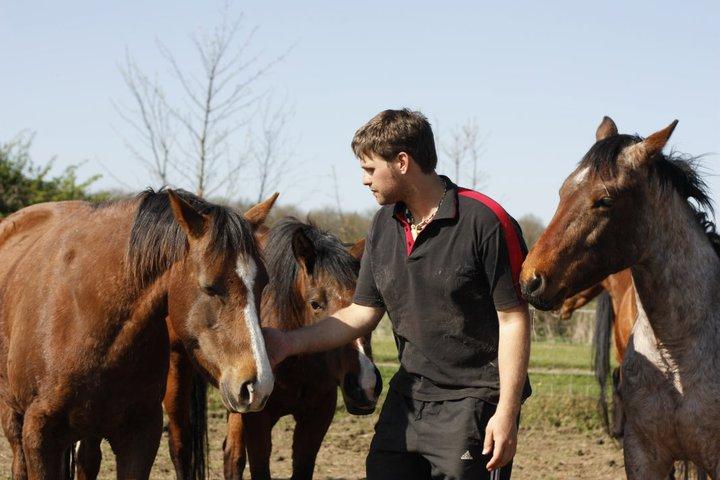 rlh 3 horses.jpg
