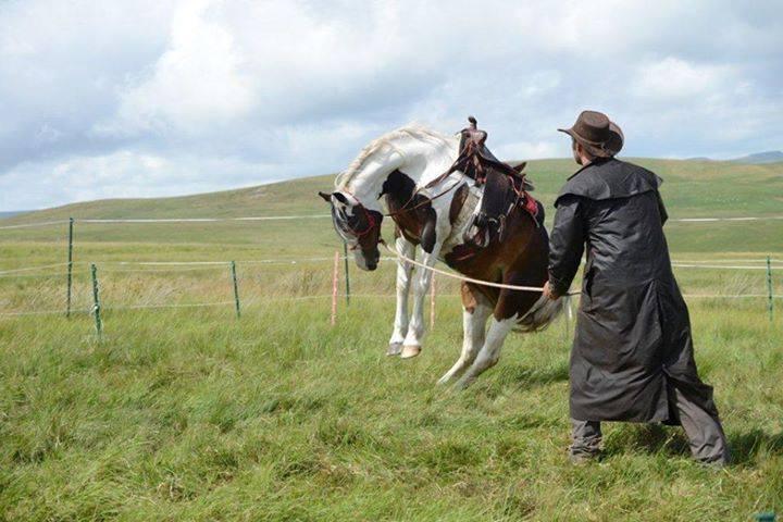 bubking horse.jpg