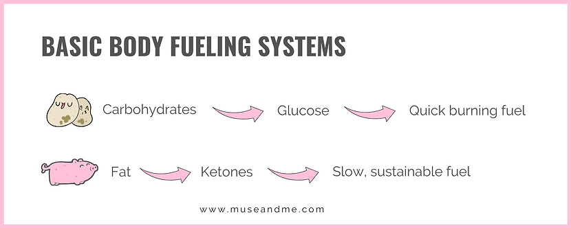 Basic Body Fueling Systems (4).png