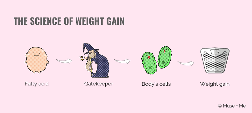 The Science of Weight Gain.png