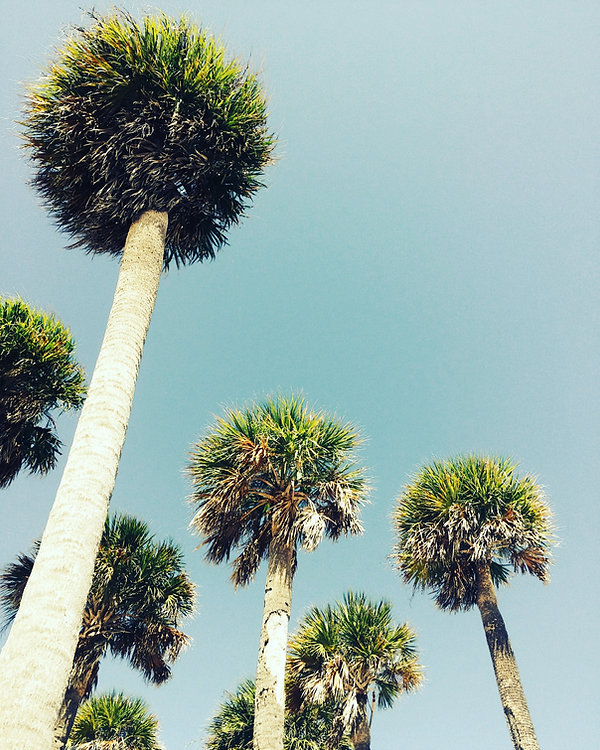 Palm trees in HI