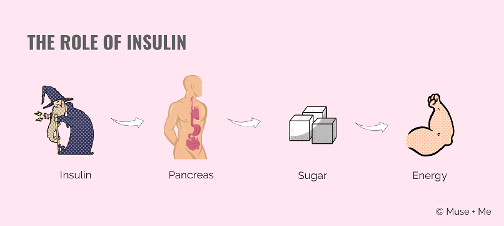 The Role of Insulin.png