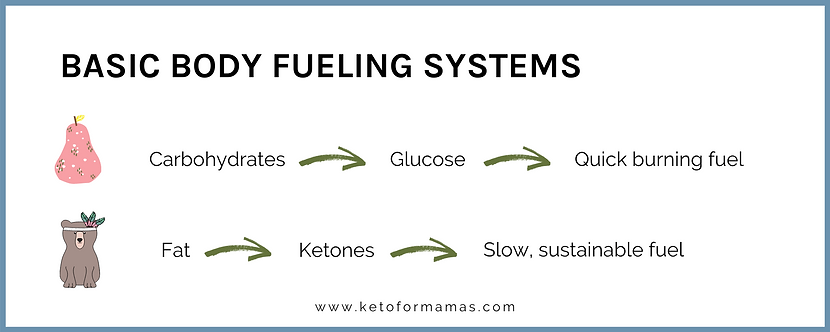 Basic Body Fueling Systems (10).png