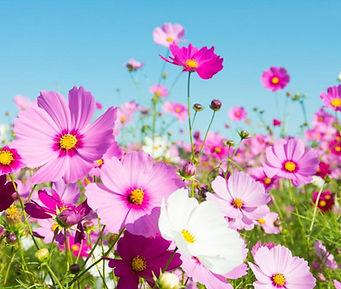 fleurs-pour-jardin-naturel-sauvage-1200x