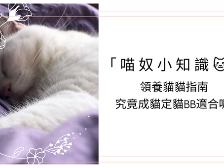 「喵奴小知識🐱」領養貓咪指南,究竟成貓定小貓好?