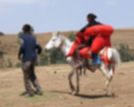 Saddle in use in Simien Mountains