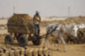 Working donkey in Brick kiln near Cairo