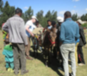 Saddle Training the Simien Mountains.jpg
