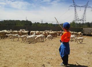 Jornada de pastoreo