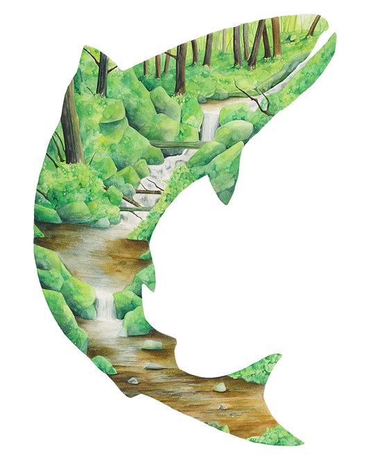 Salmon - Art Print