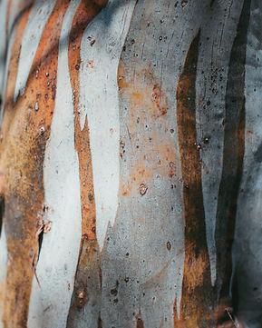 jade-stephens-LsrMOCtnDe4-unsplash.jpg