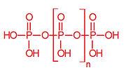 Polyphosphate.jpg