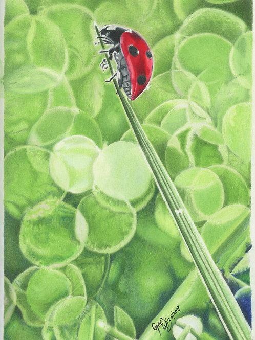 """""""Ladybug - hanging out"""""""