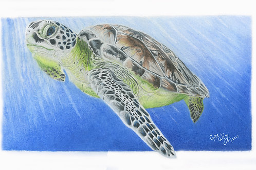 """""""Riding the Rays"""" ( Big Turtle)"""