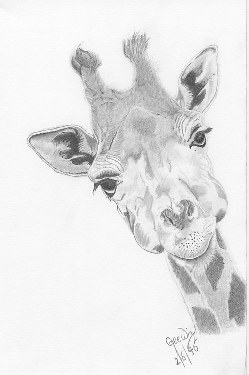 """""""Peek-a-Boo Giraffe"""""""