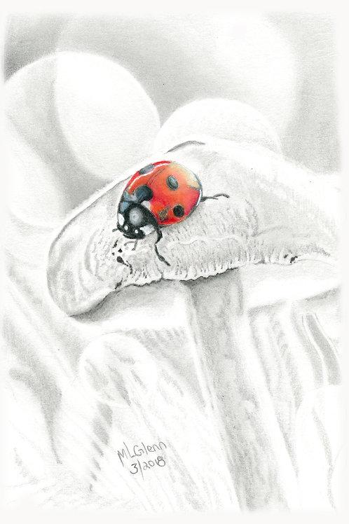 """""""Munchin' on Mushrooms"""""""