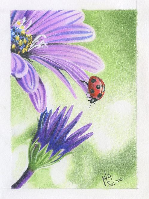 """""""Lady Bug on Daisy"""""""