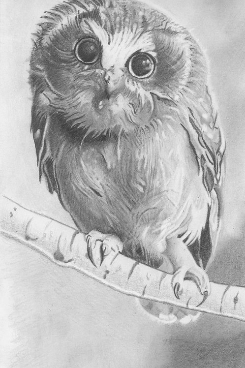 """Baby Owl"""