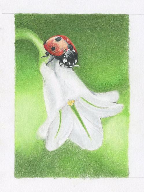 """""""Ladybug onTulip"""""""