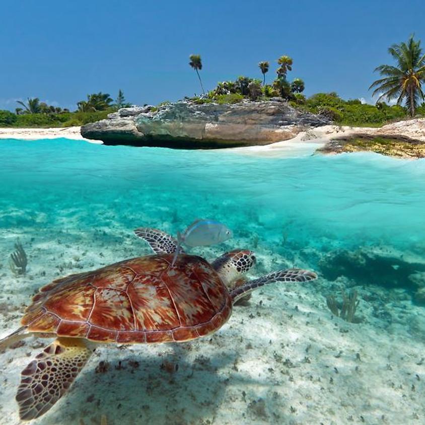 Katamaran Segel-Kite-Schnorchel Törn Grenadinen-Karibik pur im Privatjacht Feeling