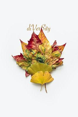 group of maple leaves-diversity .jpg