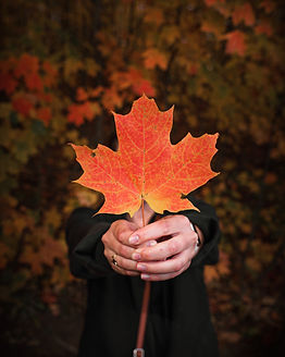 woman's hand holding 1 maple leaf.jpg