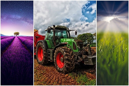 Manitoba farm Chat image2.JPG