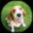 nao_testamos_animais.png