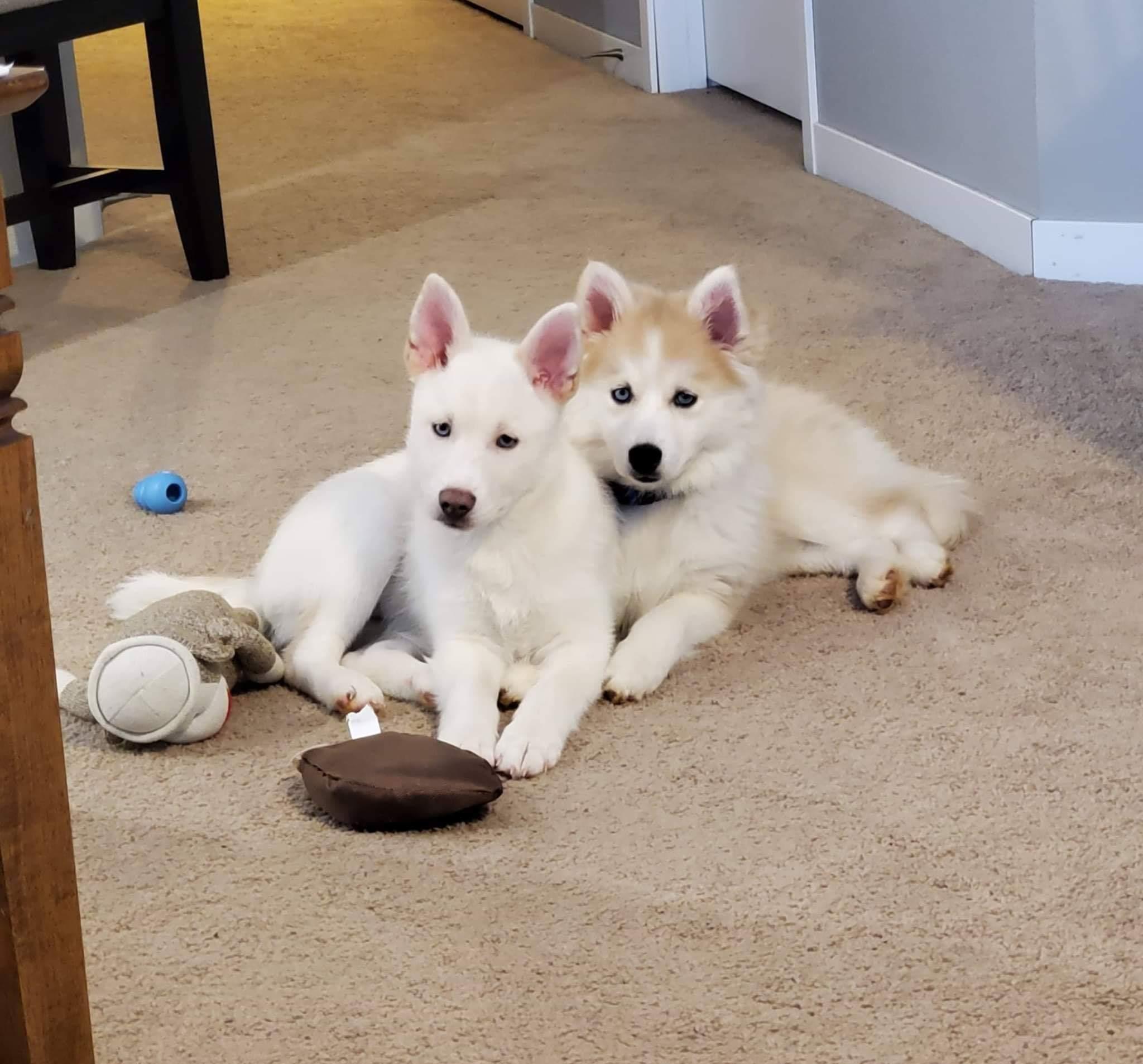 Kota and his sister Artemis