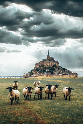 Moutons du Mont-Saint-Michel
