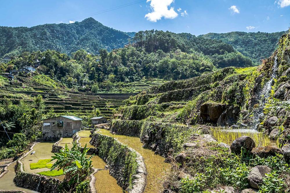 Rizières Combulo Philippines