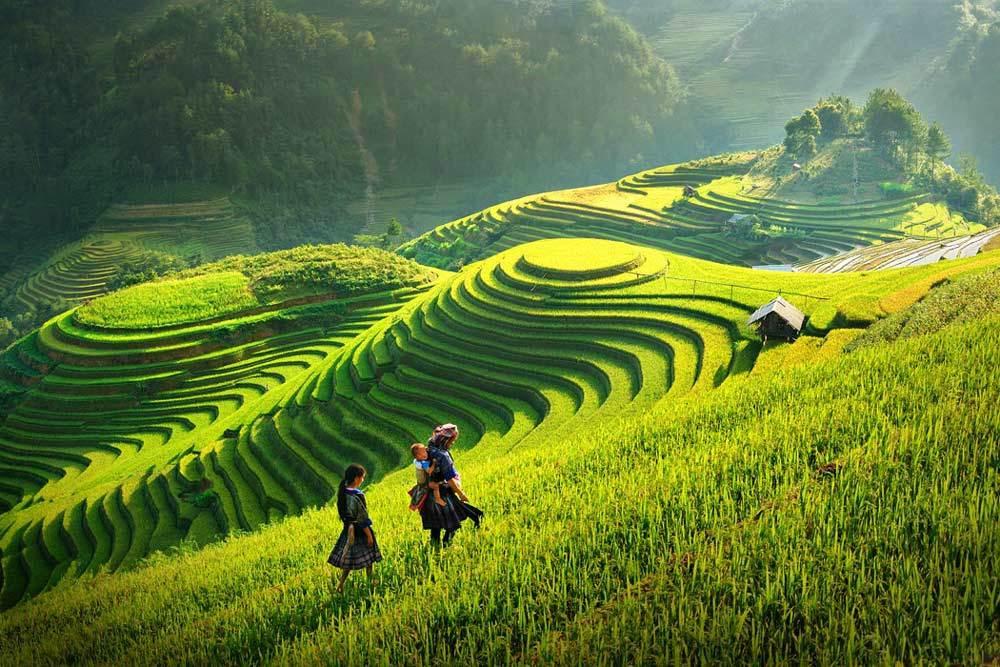 Les rizières à Sa Pa, incontournable au Vietnam