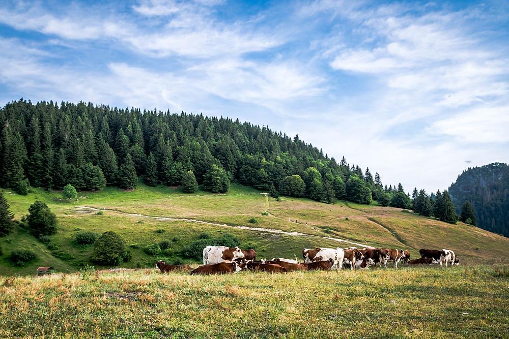 Randonnée Mont Forchat à Très le Mont