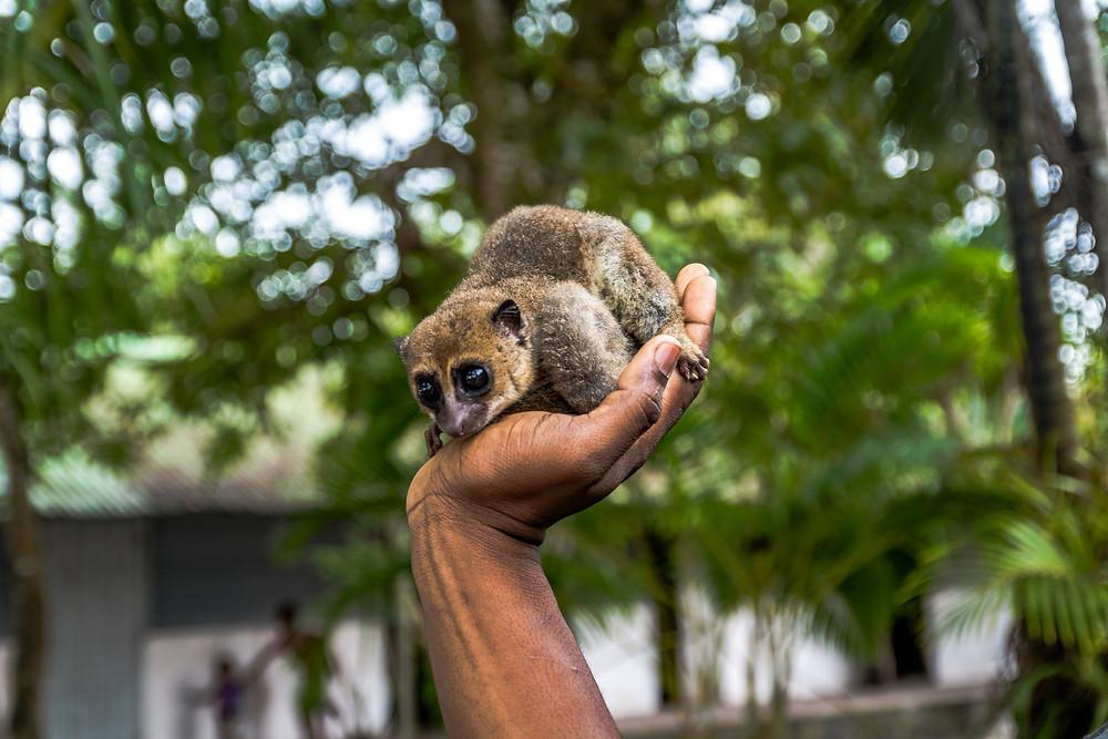 Jungle Nofy, lémuriens, Madagascar