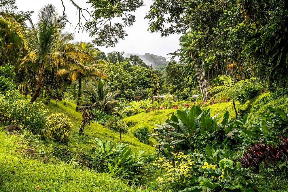 Domaine d'Emeuraude Martinique