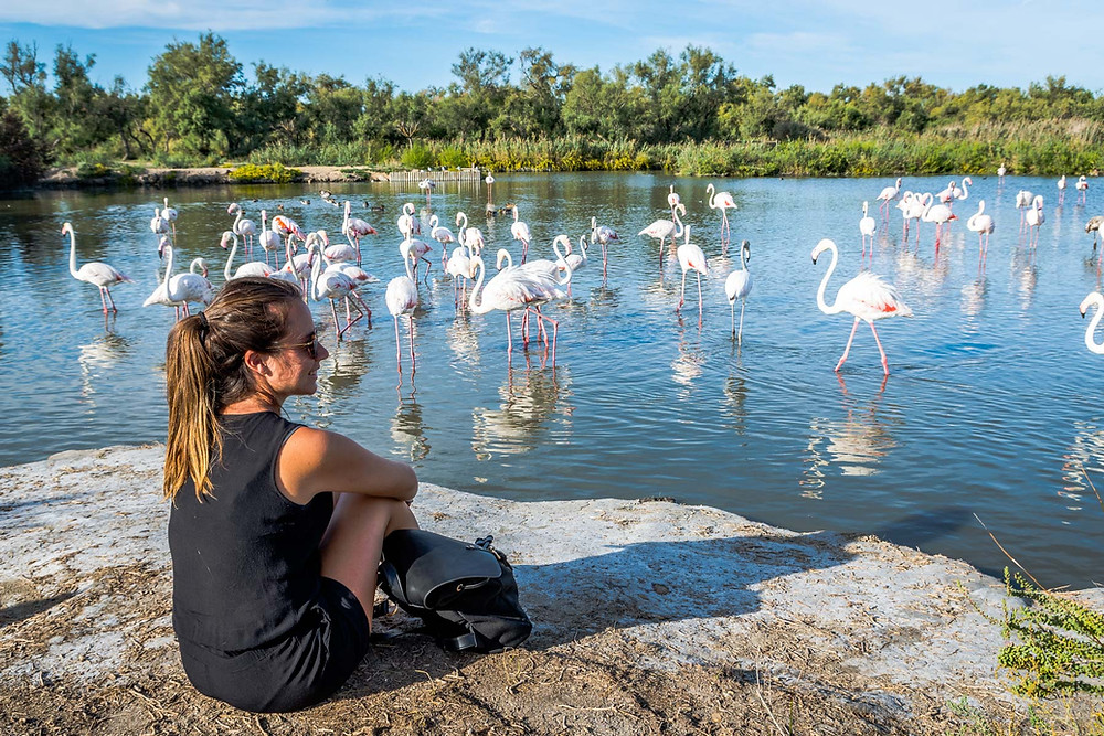 Parc ornithologique du Pont de Gau, Camargue