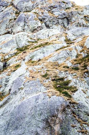 Chamois Randonnée lac Autier Mercant