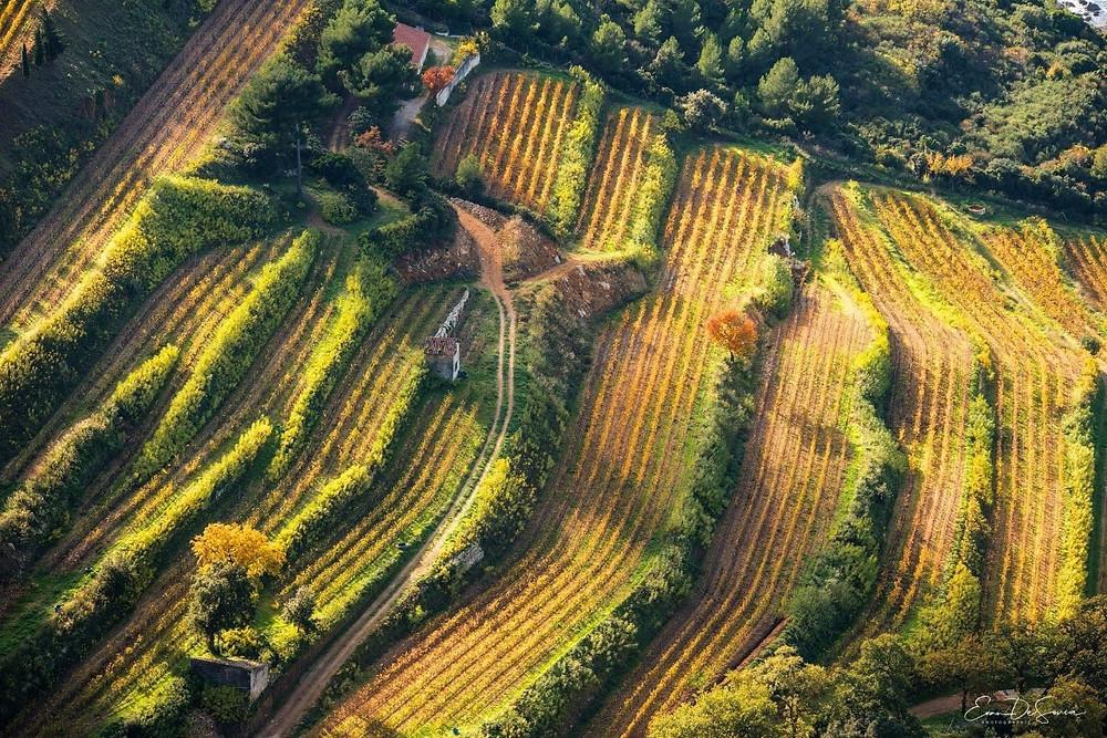 Domaine de vins Cassis