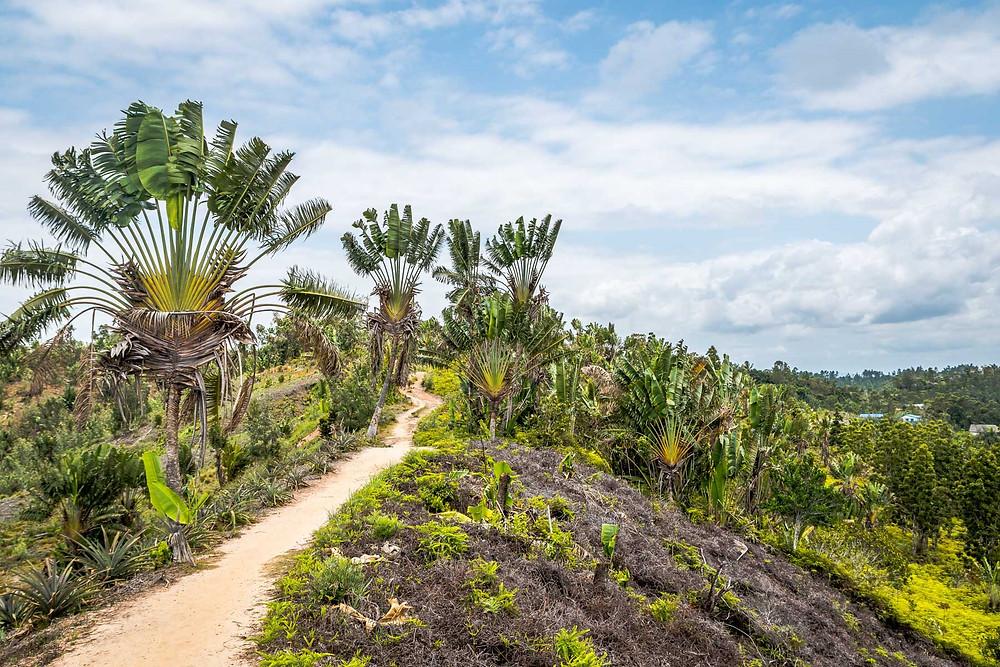 Amdranokoditra, Madagascar