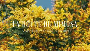 La Route du Mimosa : visiter la Côte d'Azur en hiver