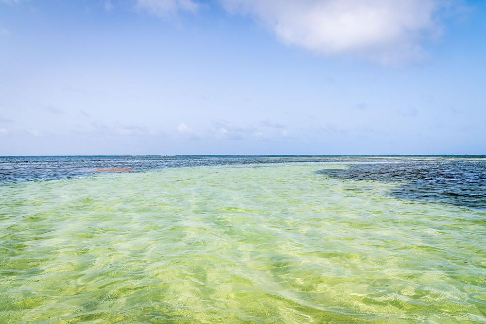 Fleurdo pirogues ilets du francois Martinique
