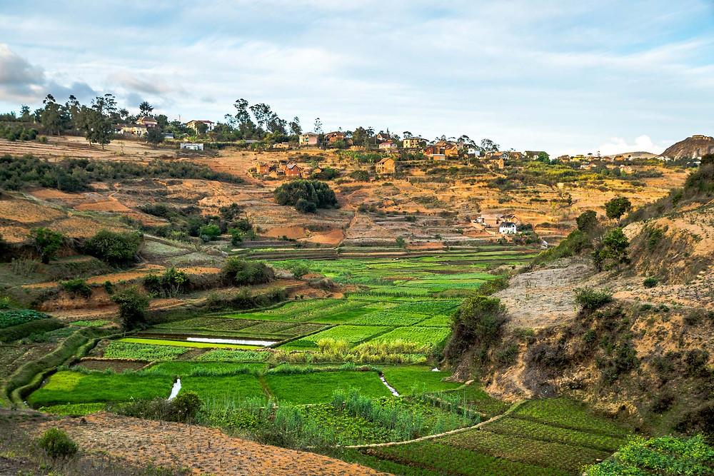 Rizières Ambatomanga Madagascar