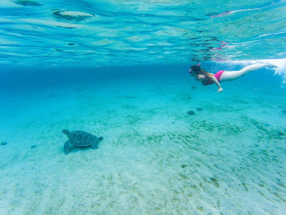 Anse Dufour, nager avec les tortues, Martinique