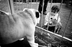 english bulldog and young girl